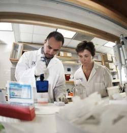 I když střední délka životapacientů sroztroušenou sklerózou je téměř stejná jako uzdravých vrstevníků, na roztroušenou sklerózu doposud neexistuje žádná známá kauzální léčba. Stávající léky se zaměřují na zmírnění obtíží a předcházení nových atak, zpomalení progrese onemocnění. Podle vedoucí kolektivu Christine Beeton (vpravo) spolu s prvním autorem publikace Redwan Huq, by to obalené nanočástice uhlíku měly změnit. (Kredit: Agapito Sánchez Jr./Baylor College of Medicine)
