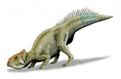 Rekonstrukce pravděpodobného vzezření živého zástupce druhu Leptoceratops gracilis. Tento malý rohatý dinosaurus byl jakýmsi vývojovým reliktem, žijícím ve stínu svého mnohem většího a vývojově vyspělejšího příbuzného triceratopse. Patřil však stejně jako on k tzv. lancijské fauně, tedy poslední populaci neptačích dinosaurů, žijících v nejpozdnější severoamerické křídě. Kredit: Nobu Tamura; Wikipedie (CC BY 3.0)