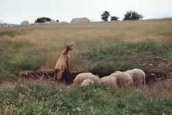 22. června 2000 nebyl na Lykajské planině žádný vlk v dohledu. Kredit: Zde, Wikimedia Commons.