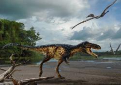Timurlengia euotica je dalším z řady asijských tyranosauroidů, objevených v posledním desetiletí. Možná právě tento druh z počínající pozdní křídy Uzbekistánu patřil k přímým předkům slavného severoamerického tyranosaura, žijícího asi o 20 milionů let později. Ačkoliv byl zhruba třicetkrát lehčí než jeho pozdější příbuzný, představoval ve svých ekosystémech nejspíš obávaného predátora. Kredit: Todd Marshall