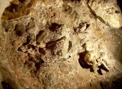 Kostra Little Foot v místě nálezu - na dně jeskyně Sterkfontein. Kredit: V. Mourre
