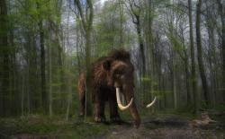 Kde jsou mamuti, tam dlouho stromy nebudou. Kredit: CC0 Creative Commons.