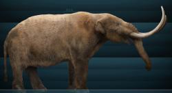 """Pravděpodobná rekonstrukce vzezření dospělého samce """"mastodonta"""", tedy druhu M. americanum. Objevují se domněnky, že tito chobotnatci mohli podobně jako mamuti na Wrangelově ostrově přežít až téměř do historické doby, podle některých informací snad až do prvních století našeho letopočtu. Tyto zprávy jsou ale neověřené a zřejmě se nezakládají na skutečnosti. Kredit: Sergiodlarosa, Wikipedie (CC BY-SA 3.0)"""