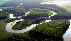Stávající legislativa může z porostů Moravské Amazonie snadno udělat oteplovací hrozbu spadající do evidence registru IRZ. (Kredit: autor RML, série dalších obrázků zde)