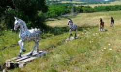 Na pap�rov� zebry nedaleko Budape�ti, kter� m�ly v�razn� pruhy si sedalo m�n� ov�d�. (Kredit G�bor Horv�th E�tv�s University)