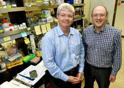 Herbert W. Virgin (vlevo) a Thad Stappenbeck prokázali, že matky mohou předat informace potomkovi zvláštním způsobem, prostřednictvím DNA bakterií. Mikrobi tedy mohou hrát významnou roli v tom, jak geny zvládají nemoce a zajišťují zdraví u vyšších organismů. (Kredit: Robert Boston, WA)