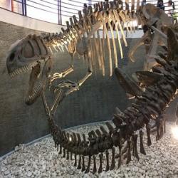 Kostra druhu Yangchuanosaurus shangyouensis v expozici Přírodovědného muzea v Pekingu. V popředí je vidět ocasní část kostry stegosaurida rodu Tuojiangosaurus multispinus, který s jangchuanosaurem (ke své smůle) sdílel jurské ekosystémy dnešní jihovýchodní Číny. Kredit: BleachedRice; Wikipedie (CC BY-SA 4.0)