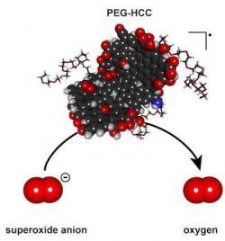 Polyethylenglykol-hydrofilní uhlíkaté klastry vytvořené na Rice University selektivně působí na T-buňky a inhibují jim jejich zabijácké choutky.Kredit: Errol Samuel