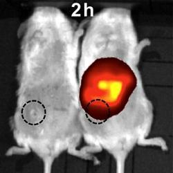Nanočástice proti nádorovým kmenovým buňkám. Kredit: American Chemical Society.