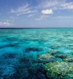 Australané se svými kolegy z IPCC neshodnou na ničem. Zatímco Abbotovi vychází, že pokud by se v atmosféře množství CO2 zdvojnásobilo, mohlo by se oteplit maximálně o  0,6 °C.Mezivládní panel pro změnu klimatu prognózuje 1,5 °C až 4 °C.