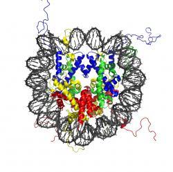 Stavba nukleozomu; šedě DNA a barevně uvnitř histony. Kredit: Wikipedia