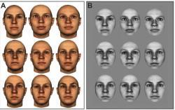 Ukázka několika tváří, které ryby musely od sebe odlišit, pokud chtěly za svůj střik dostat odměnu.  (Kredit: Cait Newport, University of Oxford)