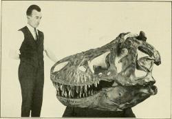 Obří lebky prvních objevených tyranosaurů ukrývaly podle domněnek paleontologů ze začátku 20. století pouze malé a nepříliš výkonné mozky. Teprve s novými objevy a nástupem moderních technologií se ukázalo, že pravda je poněkud jiná. Tyranosauři nebyli žádnými druhohorními génii, ale nebyla to ani vyloženě tupá stvoření (zejména pak nikoliv na poměry inteligence svých současníků). Snímek z roku 1921. Kredit: Australian Museum, Wikipedie