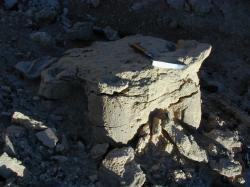 Přirozený odlitek otisku stopy zadní končetiny neznámého sauropodního dinosaura. Vzhledem ke skutečnosti, že se jedná o sedimenty geologického souvrství Nemegt, je poměrně pravděpodobným původcem právě saltasaurid druhu Opisthocoelicaudia skarzynskii. Kredit: Phillip J. Currie; Wikipedia (CC0).
