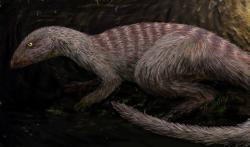 """Rekonstrukce vzezření """"norujícího"""" dinosaura druhu Oryctodromeus cubicularis. Tento severoamerický ornitopod žil v období geologického věku cenoman, asi o 30 milionů let později než jeho čínský příbuzný. Byli si však zřejmě značně podobní, a to přinejmenším z hlediska velikosti a celkového tvaru těla. Kredit: FunkMonk; Wikipedie (CC BY-SA 3.0)"""