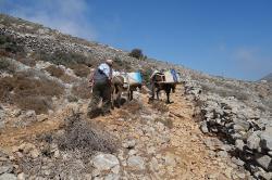 Doprava vody na horskou samotu Oxo Meria. Amorgos. Naštěstí po dobré cestě (kalderími). Kredit: Zde, Wikimedia Commons.