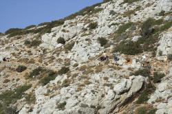 Smíšená kavalérie ostrova Irakleia se vrací z pouti k horské jeskyni. Skvělý chodník zjevný. Kredit: Zde, Wikimedia Commons.