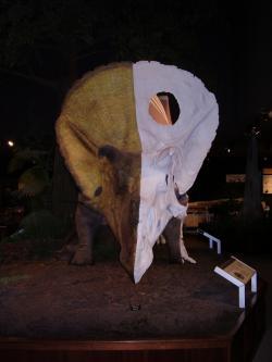 Model torosaura v životní velikosti, expozice Museum of the Rockies v Bozemanu (Montana, USA). Lebka měří na délku (zde spíše na výšku) téměř 3 metry. Velikost ceratopsida vynikne teprve při blízkém pohledu na podobný model, protože dinosaurus dosahoval velikosti i hmotnosti dospělého sloního samce. Kredit: V. Socha, červenec 2009.