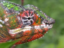 Pohánějí rozpínání vesmíru chameleoni? Kredit: Tom Junek / Wikimedia Commons.