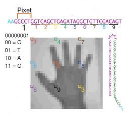 Ukázka převádění charakteristiky pixelů z obrázku do pixetů a tripletů oligonukleotidů – morzeovky používané živou přírodou.  (Kredit: Shipman a kol., Harvard Univ. 2017)