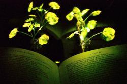 Svítící potočnice – předzvěst samonabíjecího veřejného osvětlení. Foto:Seon-Yeong Kwak, MIT