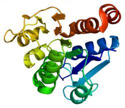 Protein deglycase DJ-1. Povzbuzení genu k jeho vyšší produkci zasahuje do produkce antioxidantů (například glutathionu). Ty oslabují neblahý efekt oxidačního stresu na který jsou jsou zvláště náchylné nervové buňky v mozku. Tento mechanismus zabraňuje patologickému shlukování proteinu (alfa-synukleinu) a následnému umírání neuronů produkujících dopamin a vzniku Parkinsonovy nemoci. (Poznámka: nenechte se zmást zatím   neustálenou teminologií. Některé týmy nazývají gen řídící produkci proteinu DJ-1 genem DJ-1, jiní o něm píší jako o genu PARK7). Kredit: Emw, Wikipedia.