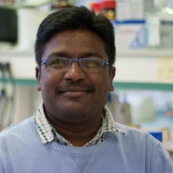 Rajendra  Kurapati, první autor publikace prokazující, že neutrofily zvládají degradovat jedno i vícevrstevný grafen. University of Strasbourg, Francie. (Kredit: UNISTRA)