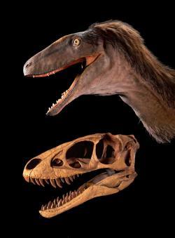 Rekonstruovaná lebka a tvar hlavy raptorexe. Ačkoliv byl původně popsán jako samostatný rod a druh tyranosauroida, dnes se většina vědců domnívá, že šlo ve skutečnosti o mládě druhu Tarbosaurus bataar. Kredit: Mike Hettwer, web Paula Serena