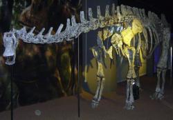 """Rekonstruovaná kostra argentinského rebbachisaurida druhu Limaysaurus tessonei. Právě na základě anatomie tohoto sauropoda provedl Carpenter rekonstrukci kostry maraapunisaura. Argentinský druh však při délce kolem 15 metrů vážil """"pouhých"""" asi 7 tun, a oproti svému geologicky staršímu severoamerickému příbuznému byl tedy pouhým trpaslíkem. Kredit: FunkMonk, Wikipedie (CC BY 3.0)"""