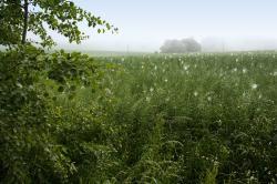 Agresivnost řepky zbaví pole plevelů, ale i biodiverzity. (Kredit: autor textu)