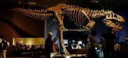 """Replika kostry největšího známého dravého dinosaura všech dob, obřího jedince druhu Tyrannosaurus rex s přezdívkou """"Scotty"""". Tento obr byl objeven v sedimentech souvrství Frenchman na území kanadské provincie Saskatchewan v roce 1991. Při délce až 13 metrů vážil zřejmě přes 8,8 tuny. Kredit: Kumiko; Wikipedie (CC BY-SA 2.0)"""