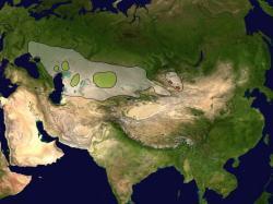 Rozšíření sajgy na počátku 18. století a dnes. Kredit: Altaileopard / Wikimedia Commons