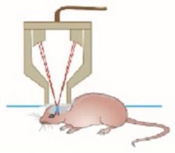 Použitie liečby skenujúcim ultrazvukom u modelovej myši (Kredit: Gerhard Leinenga and Jürgen Götz/Science Translational Medicine)