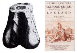 Ilustrace dolního konce stehenní kosti teropodního dinosaura, objeveného kolem roku 1676 u Stonesfieldu. Pravděpodobně se jedná o fosilii druhu Megalosaurus bucklandii, dnes už je však tento exemplář ztracen a jeho systematické zařazení tedy nelze ověřit. V roce 1763 byla tato zkamenělina označena jako Scrotum humanum. Kredit: Robert Plot, Michael Burghers; Wikipedie (volné dílo)