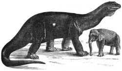 Zastaralá rekonstrukce sauropoda atlantosaura. Ohromné rozměry těchto dinosaurů udivovaly vědeckou i laickou veřejnost již koncem 19. století. Zdroj: Wikipedie