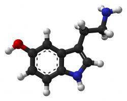 Serotonin - nejen, že nám navzdory předpokladům většinou krevní tlak snižuje, ale pokud jím zaplavíme nervové synapse, navodí nám stav dobré pohody, spokojenosti, hmatové citlivosti a citovou empatii.