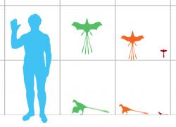 Velikostní srovnání některých skanzoriopterygidů s člověkem. Zelená silueta je druh Yi qi, oranžová Epidexipteryx hui a červená Scansoriopteryx heilmanni. Nový druh Ambopteryx longimanusbyl při délce 32 centimetrů a hmotnosti kolem 306 gramů jen o trochu menší, než zatím největší známý zástupce čeledi Yi qi. Kredit: Matthew Martyniuk, Wikipedie (CC BY-SA 4.0)