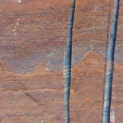Nové nejstarší fosilie (nenápadné trojúhelníčky u středu). Kredit: Allen Nutman.