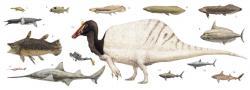 """Dospělý spinosaurus ve velikostním srovnání s potápěčem a množstvím ryb a paryb, které žily ve stejných říčních ekosystémech na severu Afriky před asi 100 miliony let (a představovaly zřejmě hlavní potravu tohoto """"obojživelného"""" predátora). Kredit: Joschua Knüppe, Jamale Ijouiher, Wikipedie (CC BY 4.0)"""