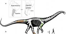 Silueta nového titanosaura ve srovnání s postavou dospělého člověka. Je zřejmé, že Notocolossuspatřil k největším tvorům, kteří se kdy procházeli po suché zemi. Absolutním velikostním rekordmanem však nebyl. Kredit: González Riga et al., web Nature.com