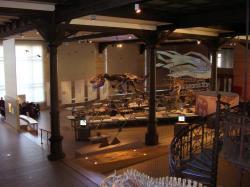 """Pohled na část haly s fosiliemi dinosaurů a dalších pravěkých obratlovců, expozice Královského belgického institutu přírodních věd. """"Stan"""" patří nepochybně ke zlatým hřebům této expozice, spolu se slavnými bernissartskými iguanodony. Vlastní snímek autora (© Vladimír Socha, únor 2009)."""
