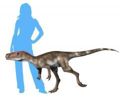 Jedním z nejstarších známých dinosaurů je vývojově primitivní teropod druhu Staurikosaurus pricei, žijící v době před 233,2 milionu let na území současné Brazílie. Stejně jako ostatní jeho současníci z ekosystémů souvrství Santa Maria žil právě v době Karnské pluviální epizody. Tato významná událost zřejmě rozhodla o budoucí terestrické nadvládě staurikosaurových pozdějších příbuzných. Kredit: Nobu Tamura; Wikipedie (CC BY-SA 4.0)