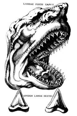 Trojúhelníkovité zuby obřích žraloků druhuC. megalodonbyly známé již ve starověku. Dlouhou dobu kolovaly legendy, že se jedná o zkamenělé jazyky nebo zuby lidožravých čarodějnic. Zde ilustrace dánského kněze a přírodovědce Nicolause Stena z roku 1667.Kredit:Wikipedie, volné dílo