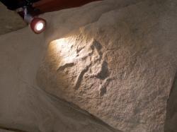 Stopa ichnorodu Anomoepus, představující zřejmě vůbec nejstarší fosilní pozůstatek po přítomnosti dinosaurů na našem území. Jeho původce tu žil před více než dvěma sty miliony let. Kredit: © Vladimír Socha, 2015 (Chlupáčovo muzeum historie Země, PřF UK v Praze).