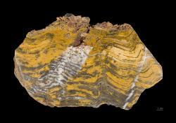 Takhle se zapsal stromatolit do horniny z období Paleoarcheanu. Podobné vzory bude rover Perseverance hledat. Kredit: Wikimedia Commons CC BY-SA 4.0