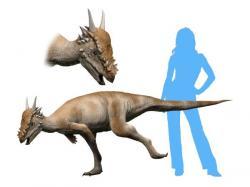 Rekonstrukce přibližného vzezření pachycefalosaurida druhu Stygimoloch spinifer. Tento býložravý dinosaurus dosahoval velikosti statného osla a jeho lebka byla ozdobena sérií výrazných trnů. Je ovšem dosud nevyřešenou otázkou, zda šlo o samostatný druh pachycefalosaurida nebo pouze o dospívajícího jedince druhu P. wyomingensis. Kredit: Nobu Tamura, Wikipedie (CC BY-SA 4.0)