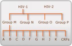 HIV typy skupiny a subtypy.