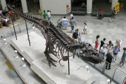 """Rekonstruovaná kostra slavného jedince druhu Tyrannosaurus rex, známého jako """"Sue"""", v původní expozici Field Museum of Natural History v Chicagu. Tento obří exemplář dosahoval podle většiny odhadů hmotnosti v rozmezí 6400 a 9500 kg, pravděpodobněji pak kolem 8400 kg. S délkou 12,3 metru tak sice nebyl nejdelším teropodem, vzhledem ke své mohutnosti však představuje nejhmotnějšího dravého dinosaura, známého současné vědě. Kredit: Shoffman 11; Wikipedie (volné dílo)"""