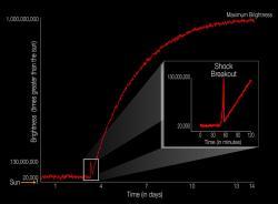Jas supernovy a porovnání se Sluncem. Ke zjasnění rázovou vlnou (shock breakout) dojde hodinu po kolapsu jádra a trvá jen asi 20 minut. Maxima jasu dosáhne rozprášený materiál bývalé hvězdy asi za 14 dní. Kredit: NASA Ames / W. Stenzel.