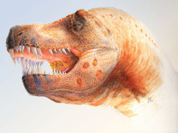 Rekonstrukce možného vzezření nakaženého jedince druhu Tyrannosaurus rex (založená na fosilním exempláři MOR 980) s dobře patrnými lézemi na spodní čelisti a v okolí hrdla. Jedná se pouze o hypotetickou rekonstrukci, založenou na odborné práci, publikované roku 2009. Ne všichni vědci s touto interpretací kruhových perforací v lebečních kostech tyranosauridů souhlasí. Kredit: Chris Glen (in Wolff, E. D. S.; et al. (2009); Wikipedie (CC BY 2.5)